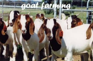 How to Start a Cattle Farming Business | Free Book PDF Download