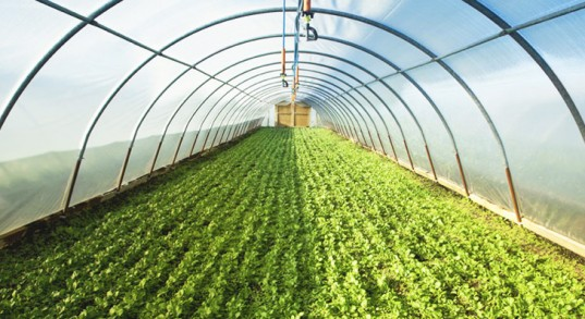 Greenhouse Farming Guide In India Agrifarming In