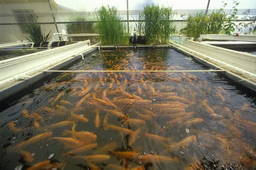 fish farming info guide for beginners agri farming