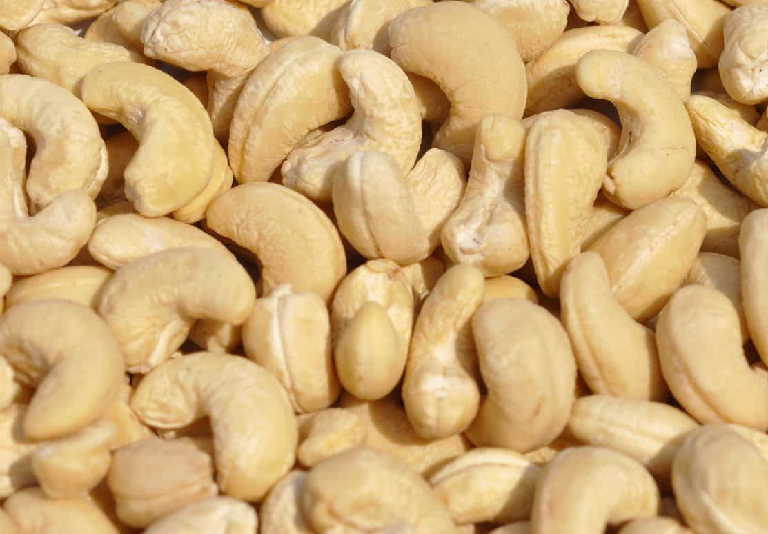 Cashew Farming Detailed Information Guide Agri Farming