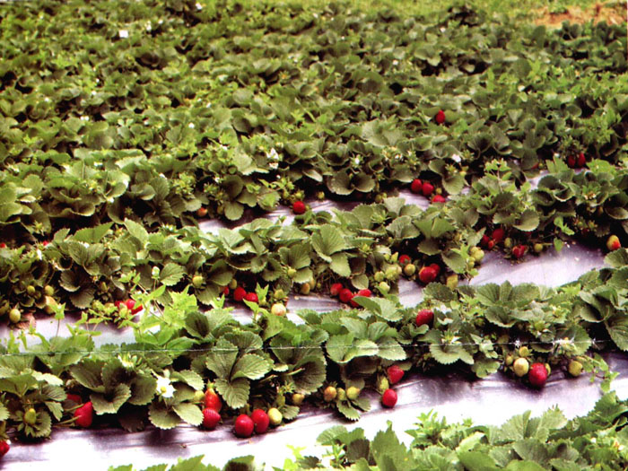 Fruit vegetable farm business plan