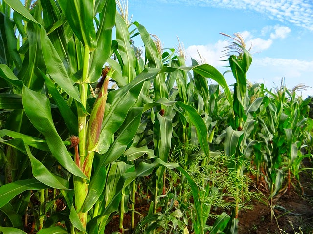 How to start crop farming in South Africa