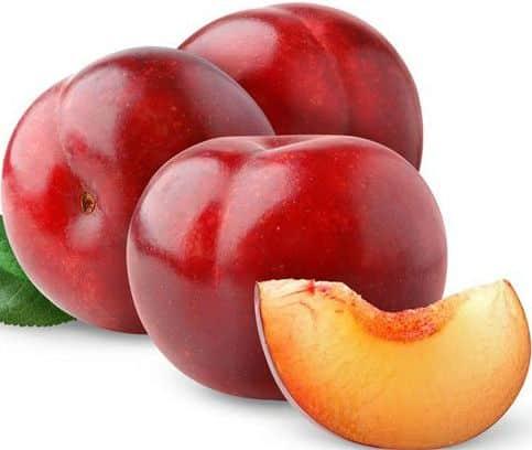 plum fruit fruit