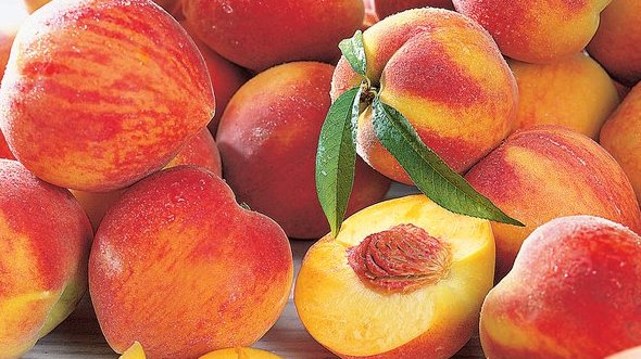 Peach Fruit Farming Information Guide   Agri Farming