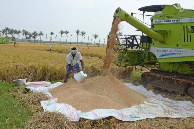 Rice Cultivation Information Guide Agrifarming In