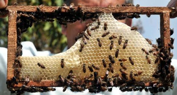 Honey Bee Farming Information Guide Agrifarming In